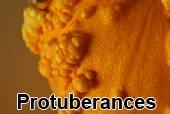 Protuberances1 টিউমারের চিকিৎসা, ছবি, লক্ষণ ও রেপার্টরি। টিউমারের চিকিৎসা, ছবি, লক্ষণ ও রেপার্টরি। Protuberances1